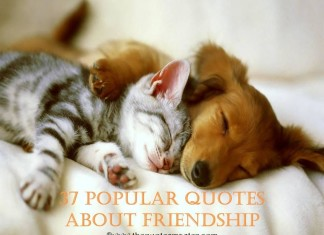 37 Popular quotes about friendship