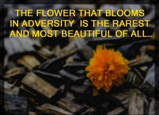 Picture quotes about adversity