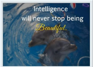 Intelligence picture quotes