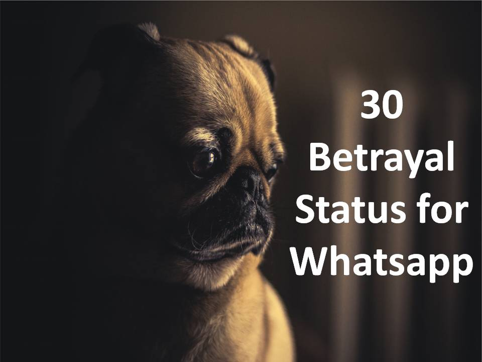 30 Betrayal Status for Whatsapp