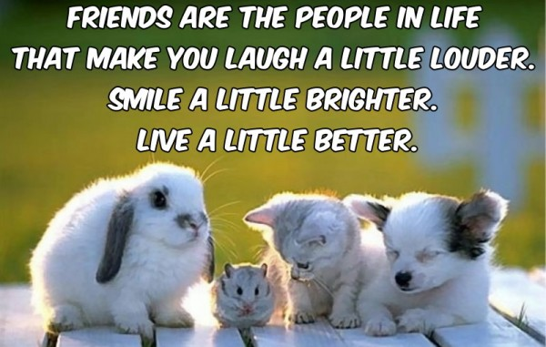 Quotes About Smile And Friendship Delectable 200 Best Captions & Quotes For Friends Group Photo