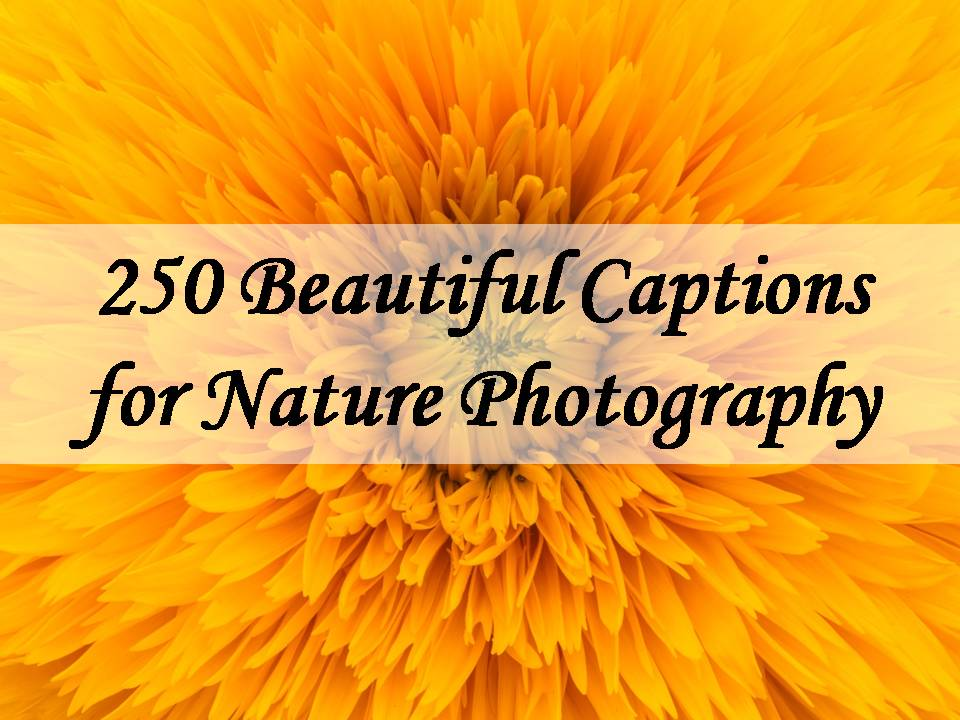 250 Beautiful Captions for Nature Photography