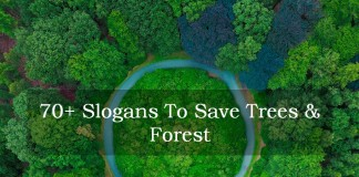 slogans on trees and forest