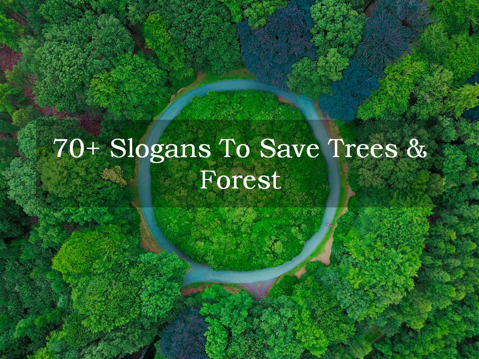 70+ Slogans To Save Trees & Forest