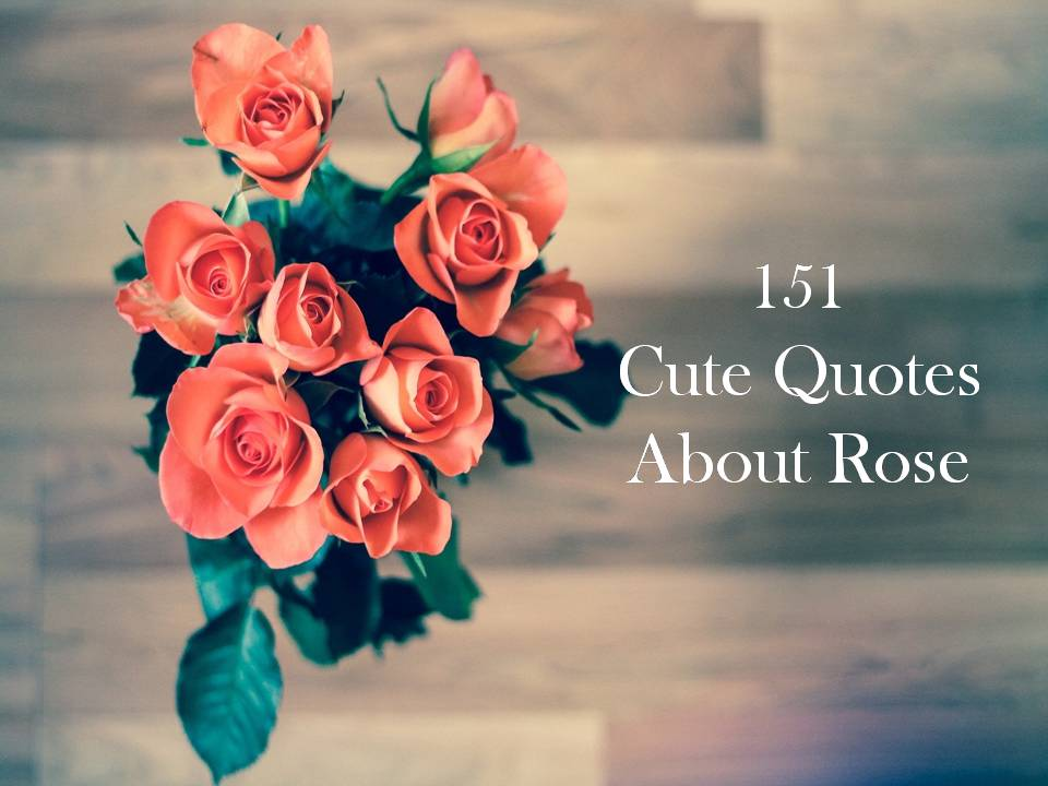 151 Cute Quotes About Rose